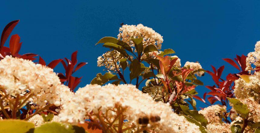 Horizon Parapente Fleurs d'Avril